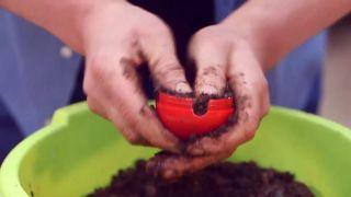 Capsulas de enraizamiento para reproducir plantas por acodo aéreo - Paso 4