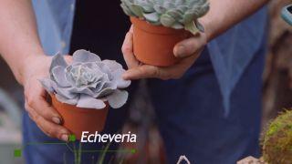 Composición con echeverias en contenedores reciclados - Echeverias