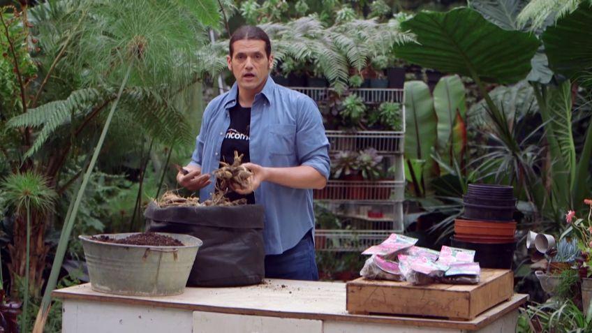 Los consejos de jardinería del fin de semana del 7 y 8 de abril de ...