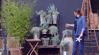 Composición de plantas grisáceas en contenedores galvanizados - Detalle