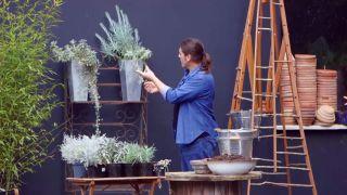 Composición de plantas grisáceas en contenedores galvanizados - Inicio