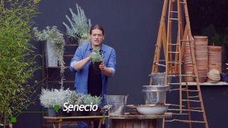 Composición de plantas grisáceas en contenedores galvanizados - Paso 3