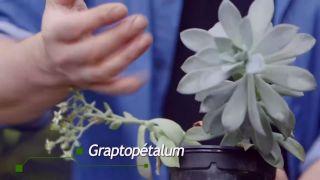 Composición de plantas grisáceas en contenedores galvanizados - Paso 4