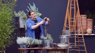 Composición de plantas grisáceas en contenedores galvanizados - Paso 5