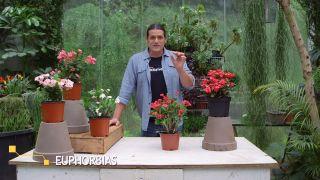 La euphorbia milii una planta con flor todo el año - Inicio