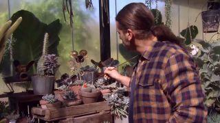 Cuidados del aporocactus - Decorar con cactus, las flores