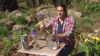 La scilla peruviana - Arreglo floral