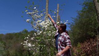 El cornejo florido - Brotes vigorosos
