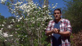 El cornejo florido - Cuidados