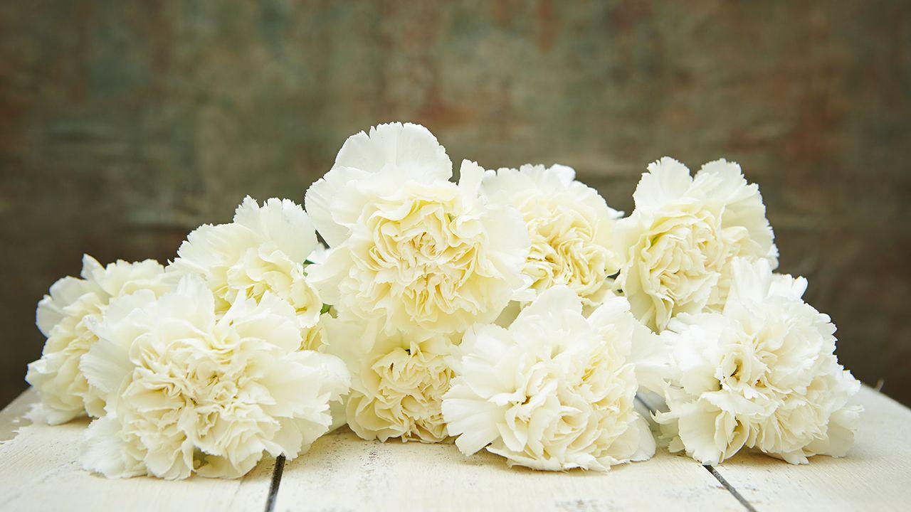 Flores Blancas Para Regalar Hogarmania