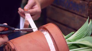 Cinta de cobre para evitar la plaga de babosas y caracoles en hostas y otras plantas - Cortar cinta de cobre