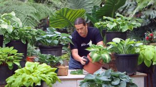 Cinta de cobre para evitar la plaga de babosas y caracoles en hostas y otras plantas - Limpiar contenedor