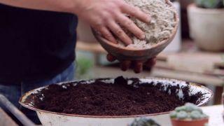 Composición de cactus en una caja de herramientas - Sustrato para cactus con arena de silice