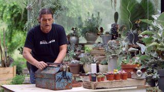 Composición de cactus en una caja de herramientas - Puntos de reciclaje