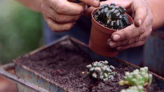 Composición de cactus en una caja de herramientas - Paso 5