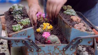 Composición de cactus en una caja de herramientas - Paso 6