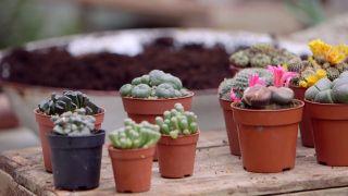 Composición de cactus en una caja de herramientas - Piedras del desierto