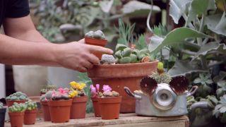 Composición de cactus en una caja de herramientas - Crecimiento de las piedras del desierto