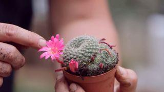 Composición de cactus en una caja de herramientas - Flor de los cactus mini
