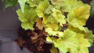 Plantas de sombra en tonos amarillos y verdes