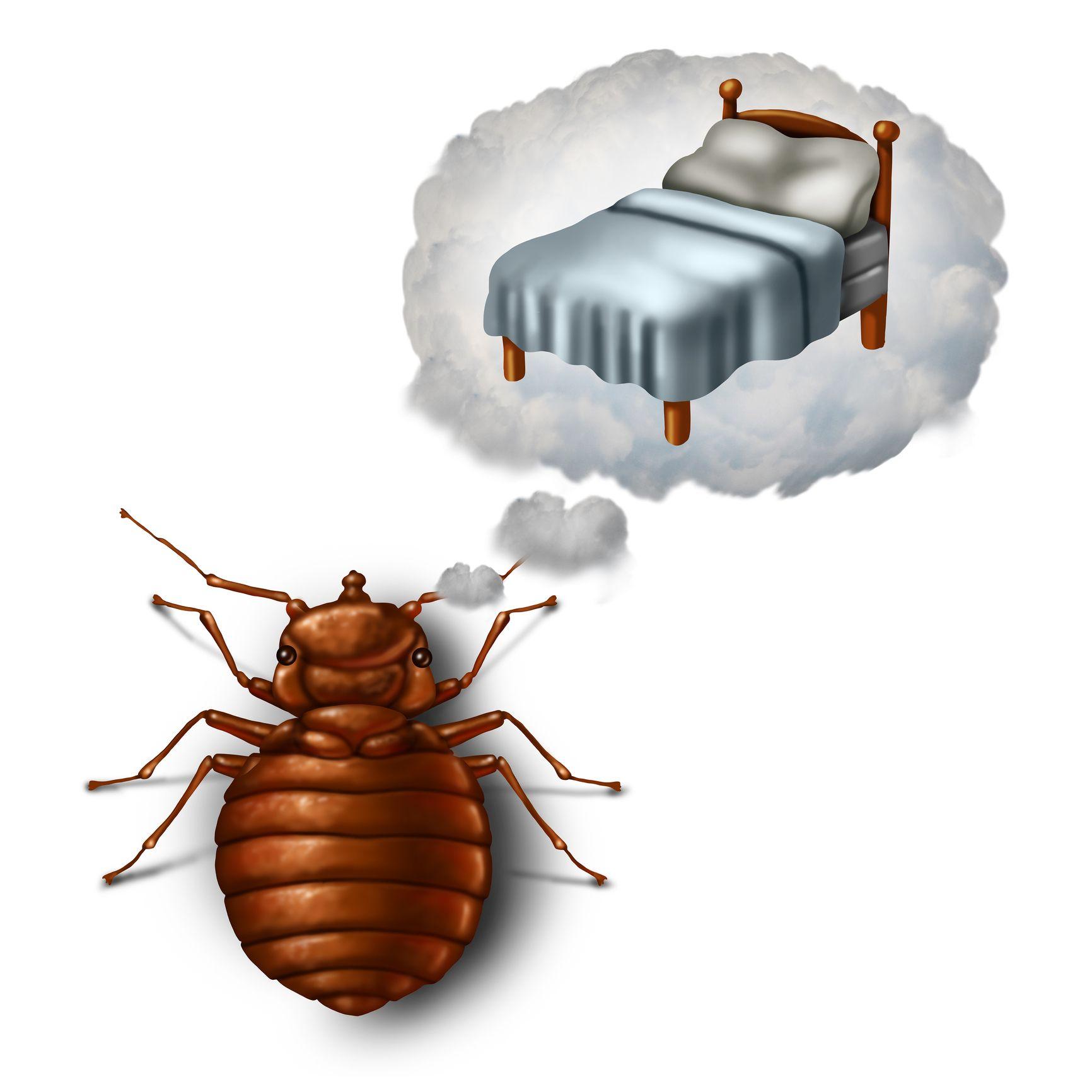 Las camas son los lugares preferidos de las chinches, ya que se alimentan de la sangre de otros animales y de los seres humanos