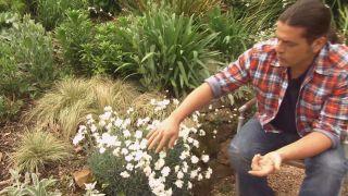Jardín con clavelinas en tonos blancos - Porte de la Clavelina