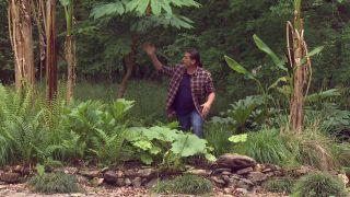 Plantas vivaces de hojas grandes - Gunnera manicata detalle