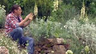 Usar plantas silvestres para el jardín - Jardín blancos y grises