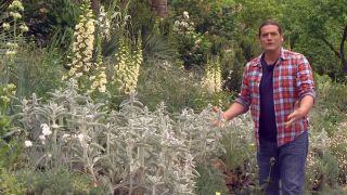 Usar plantas silvestres para el jardín - Cuidados del jardín todo el año