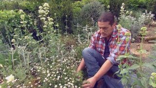Usar plantas silvestres para el jardín - Cuidados jardín con plantas silvestres