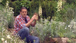 Usar plantas silvestres para el jardín - Dedaleras