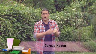 El cornus kousa o cornejo - Inicio