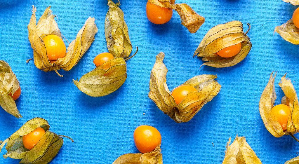 Physalis, uchuva o tomate peruano
