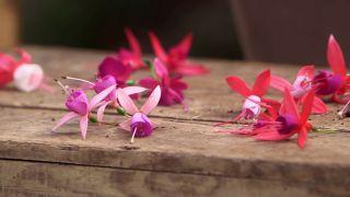 Variedades de pendientes de la reina - Flor