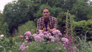 Thalictrum aquilegiifolium o Talictro - Jardín