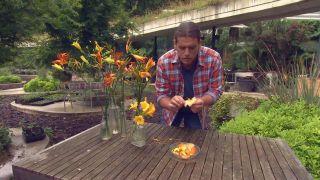 Hemerocallis, flor coméstible