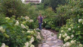 Variedades de hortensia de flor blanca - Inicio