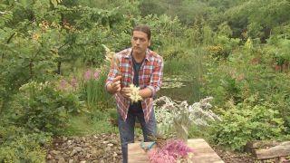 Los astilbes - Floración