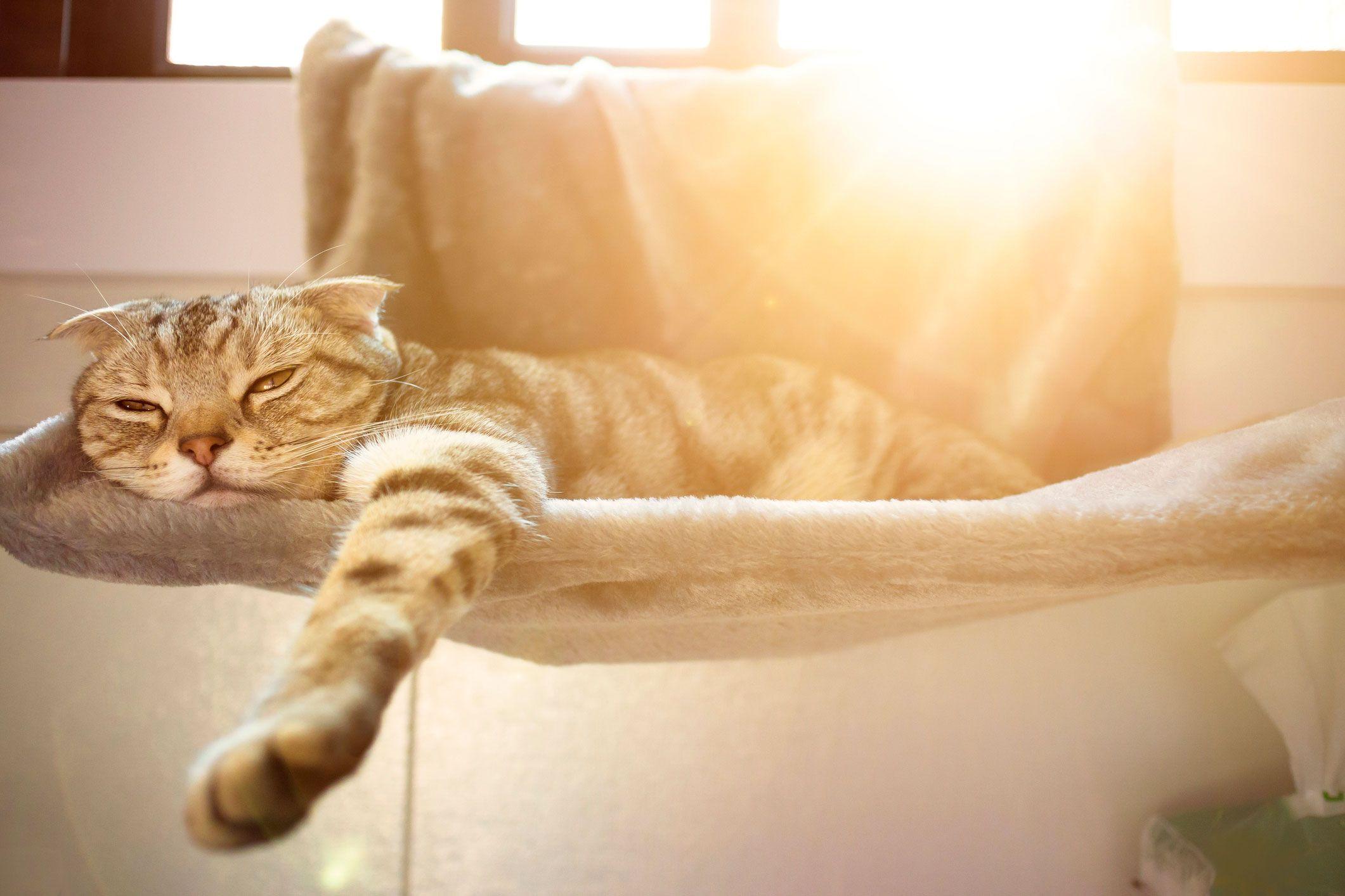 Gato tomando el sol en la ventana