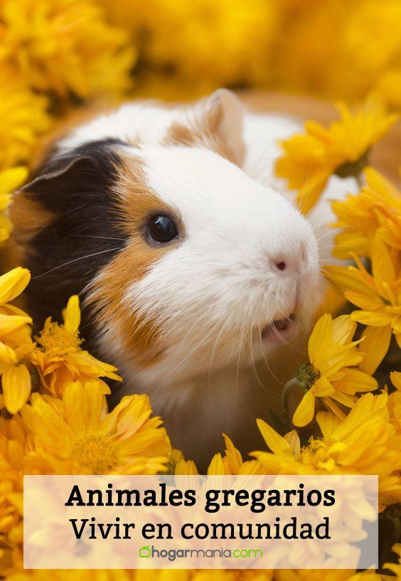 Animales gregarios: ¿Qué mascotas prefieren vivir en comunidad?