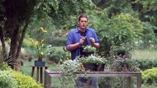 Plantas para cubrir zonas de sotobosque - Inicio