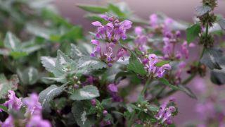 Plantas para cubrir zonas de sotobosque