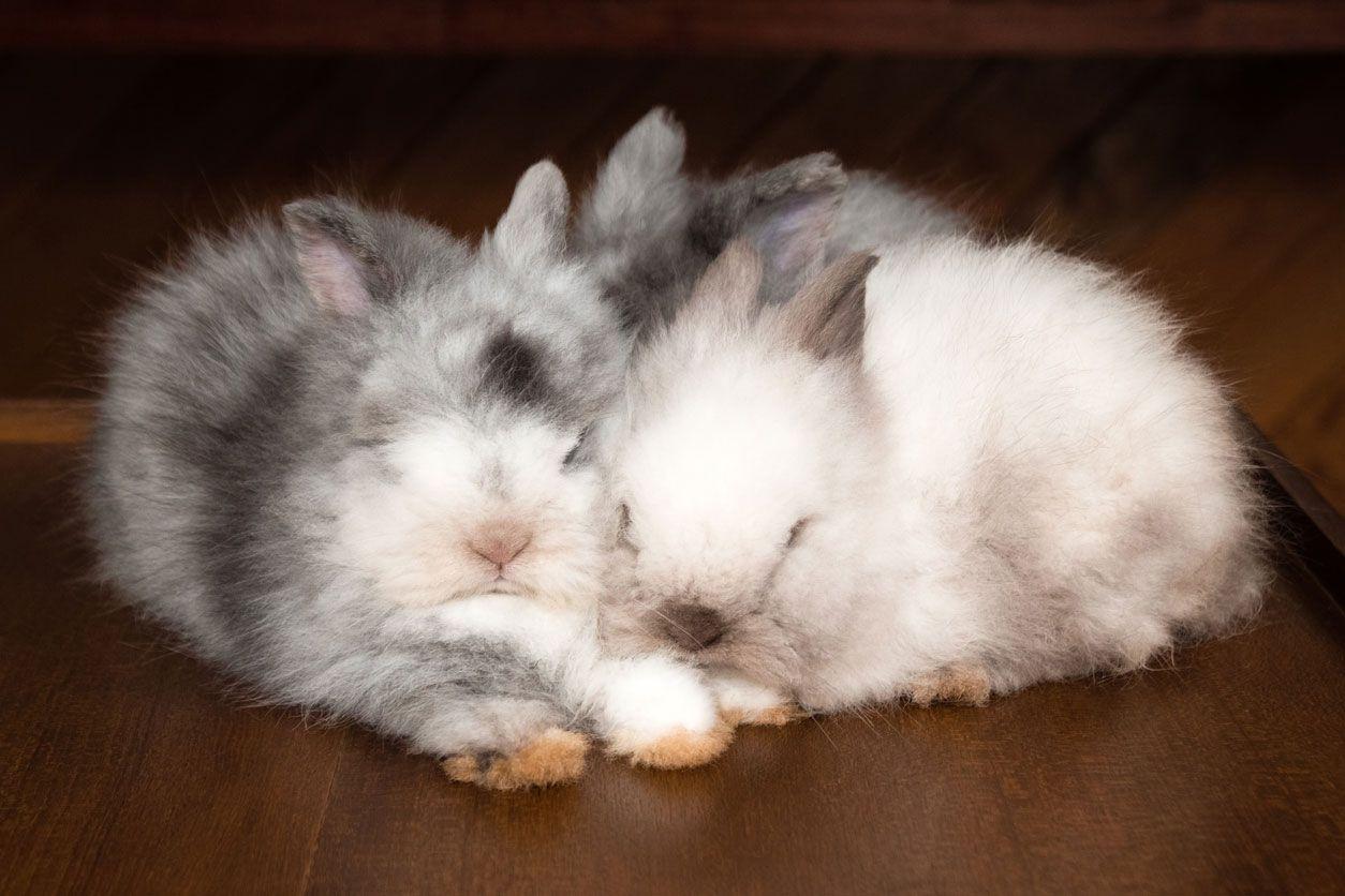 Los conejos son animales sociales y gregarios