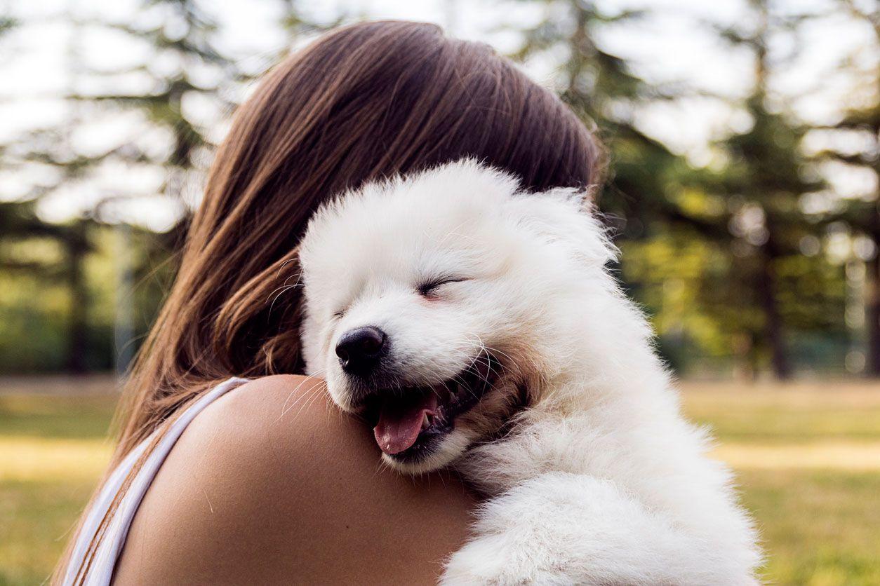 El perro es un animal muy sociable