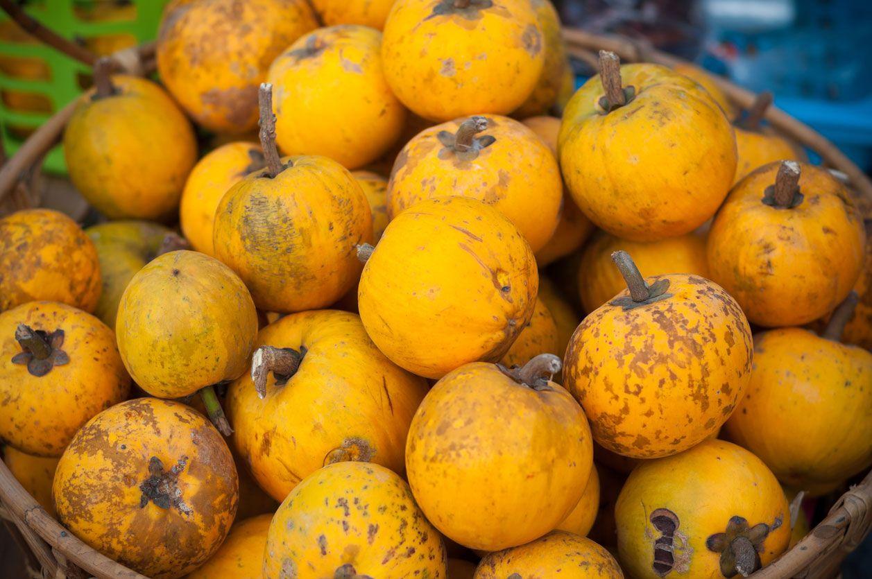 Zapote amarillo (pouteria campechiana)