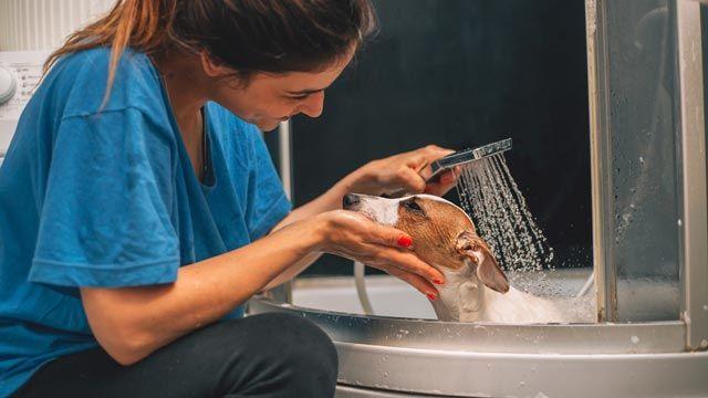 El café neutraliza los malos olores y actúa contra las pulgas.