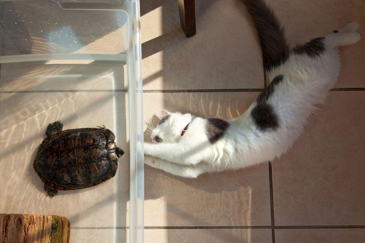 Convivencia gatos y tortugas.