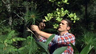 Composición floral con hojas en tonos verdes - Cortar papiro