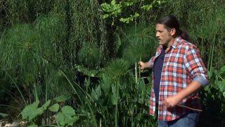Jardín con plantas acuáticas de hoja verde - Cyperus papyrus