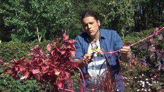 Jardín en otoño con plantas de follaje rosa - Ardisia acodo